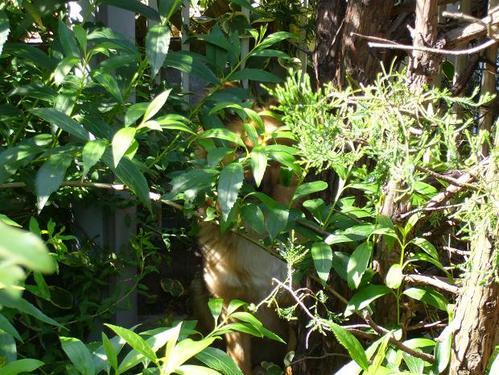 木の葉隠れのリン